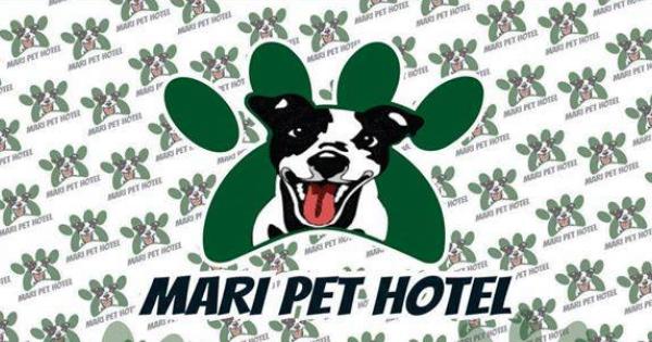 Mari Pet Hotel